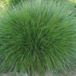 Festuca scoparia - pieno-sole - 36 - 14 - dianthusechinacea-salvia-rubeckia-crocosmia-coreopsis